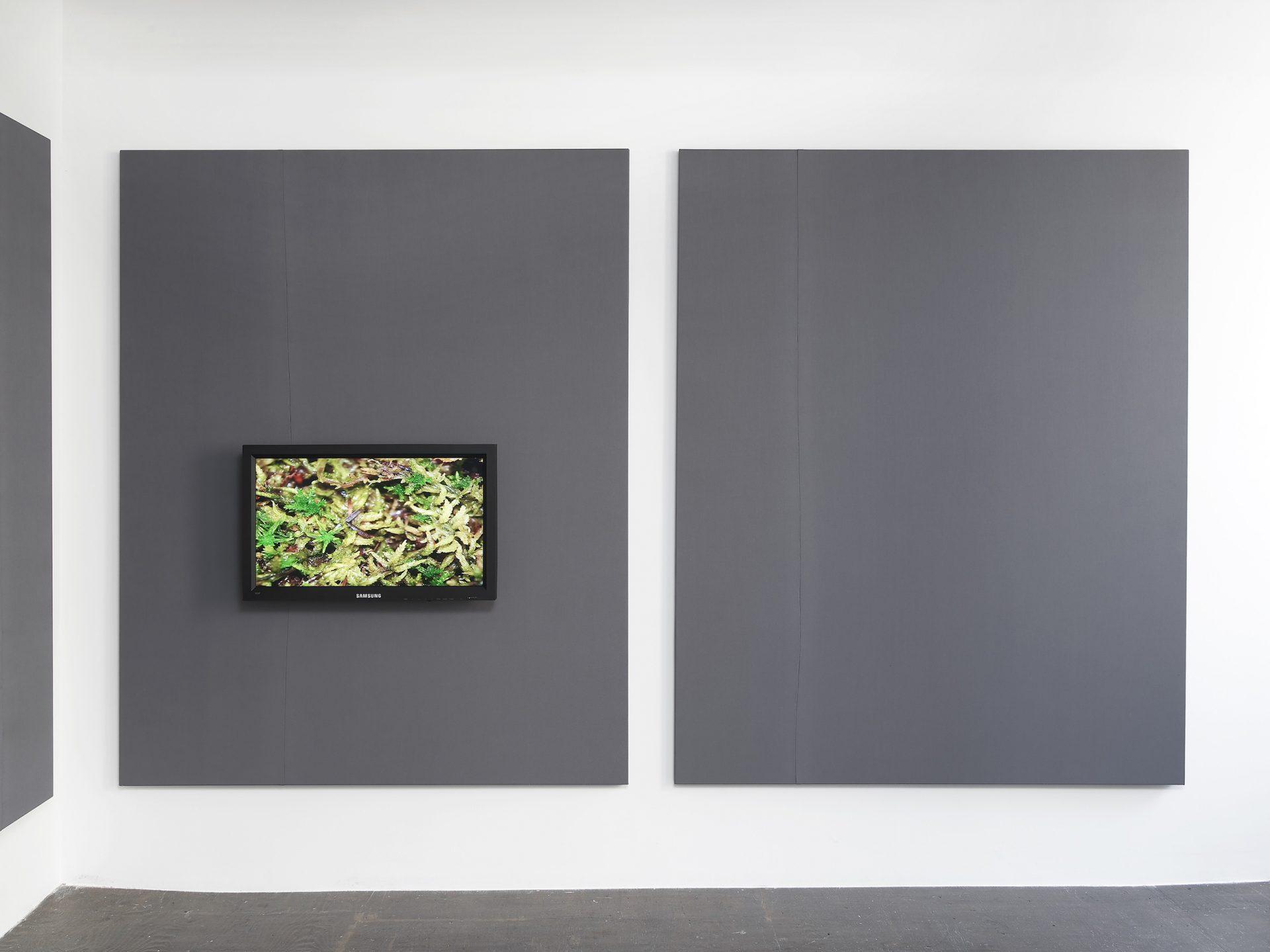 Andrea Büttner: Moos/Moss, 2012